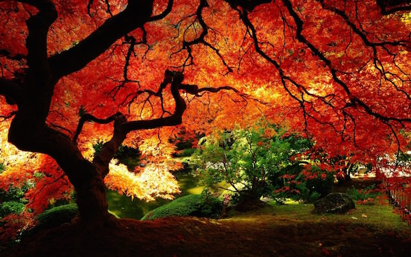 Nature Widescreen Wallpapers 167