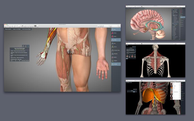скачать приложение анатомия - фото 2